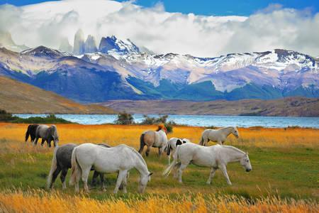 Cai lângă lac în Torres del Paine
