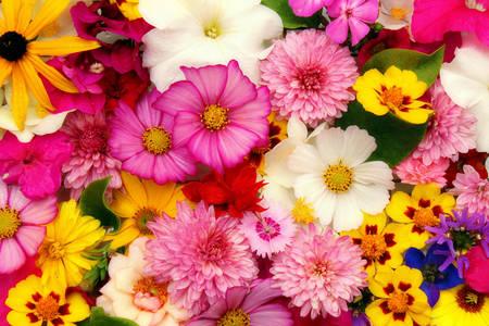 Ljetno cvijeće