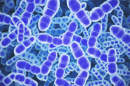 Baktérium DNS
