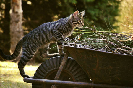 Любопитна котка