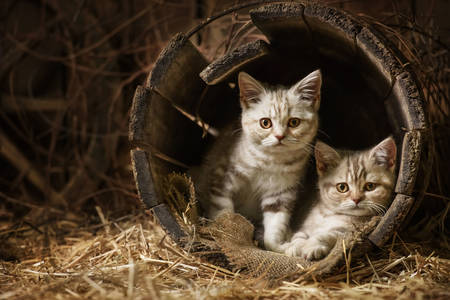 Kittens in an old barrel