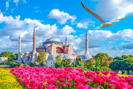 Hagia Sophia v Istanbule