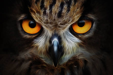 Owl macro photo