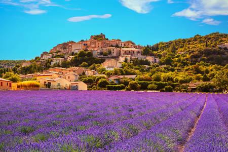 Lavender fields near Simian-la-Rotonde