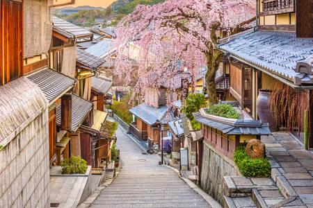 Wiosna w Kioto