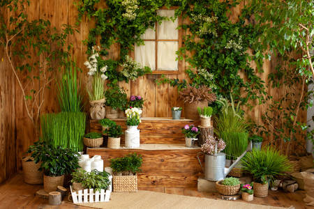 Wooden house with green plants