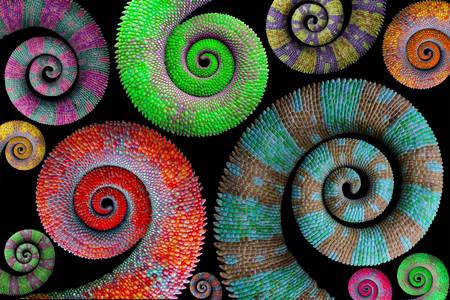 Multi-colored chameleon tails